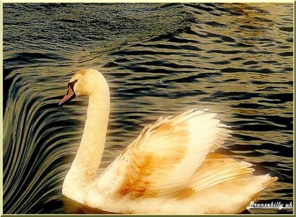 Swan waterfall