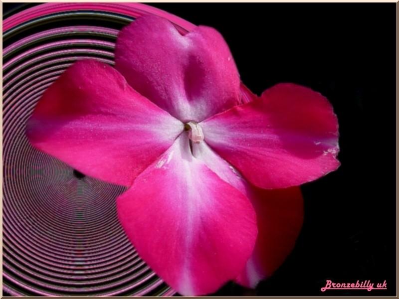 floral pink fantasy