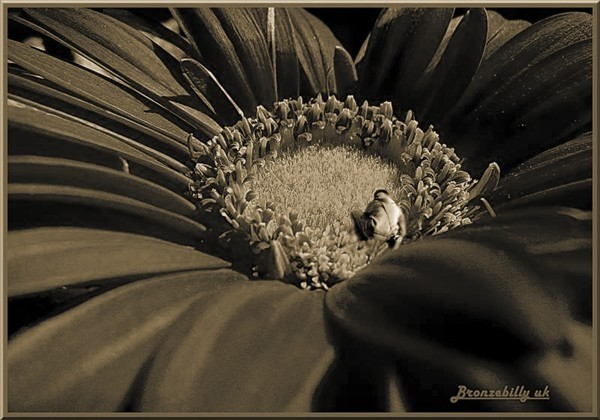 floral fantasy sepia gather pollen