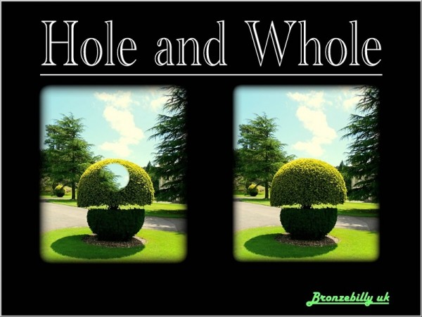 hole hedge whole hedge
