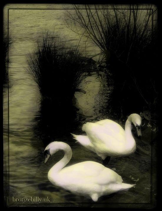 mono swans filters bronzebillyuk