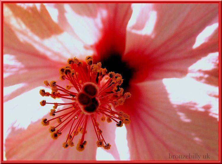 floral macro bronzebilly