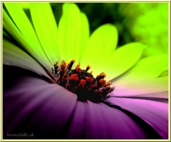 flower macro pastel bronzebilly