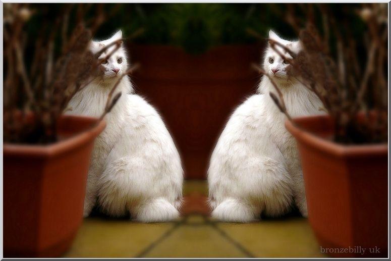 twin cats blur tool bronzebilly
