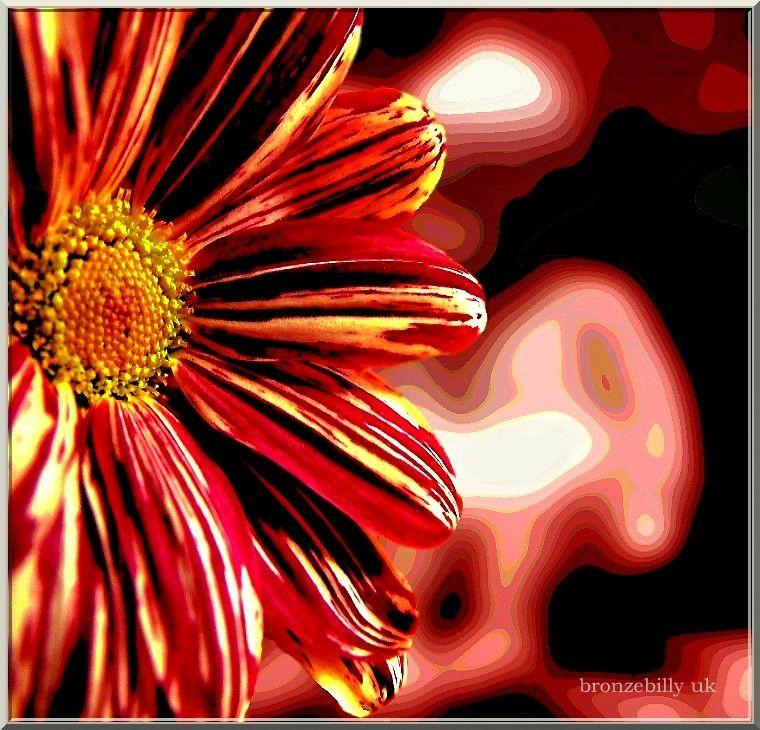billydust flower funky road bronzebilly...