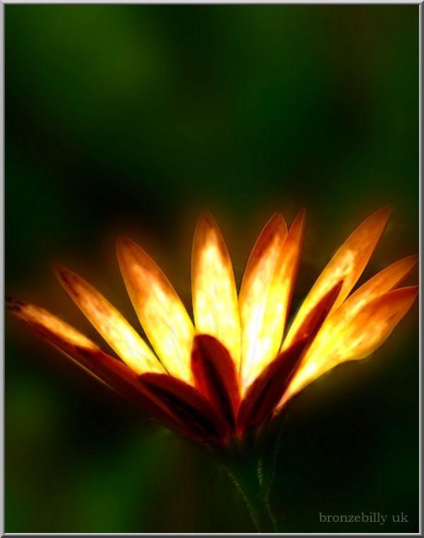 flower blazer2 light bronzebilly