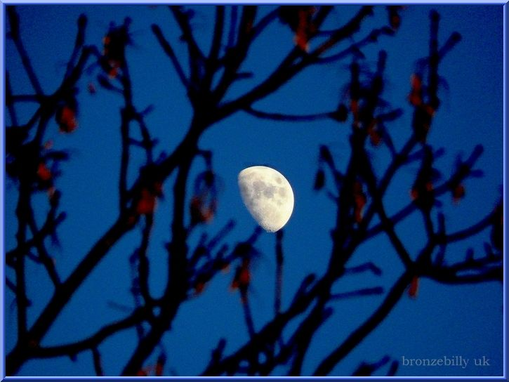 day moon through trees garden bronzebilly