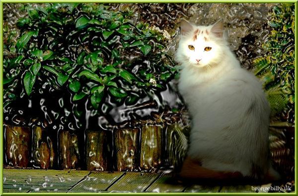 cat garden plastic art bronzebilly