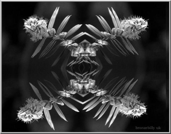geometric flower distort filter bronzebilly