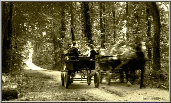 speed horse carriage forest blur bronzebilly