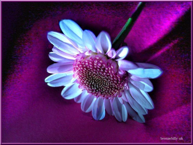 macro flower hdr bronzebilly