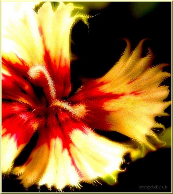 leaf flower filter explosive colour bronzebilly