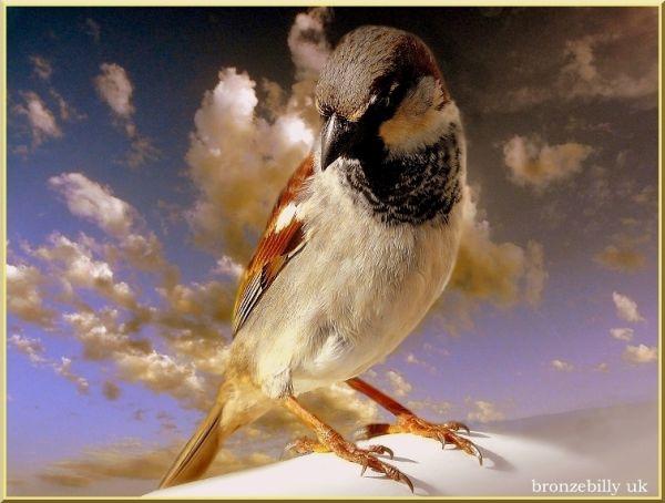 bird sky layers bronzebilly