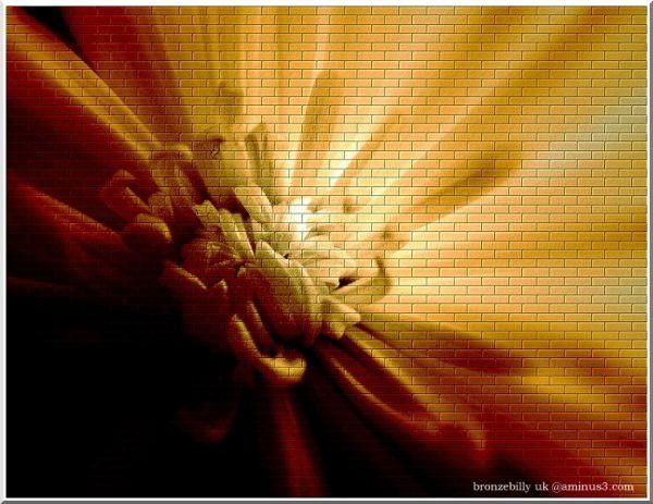 wall flower sepia light layer bronzebilly