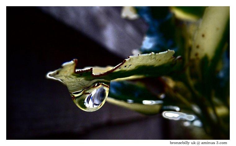rain leaf garden  drip bronzebilly