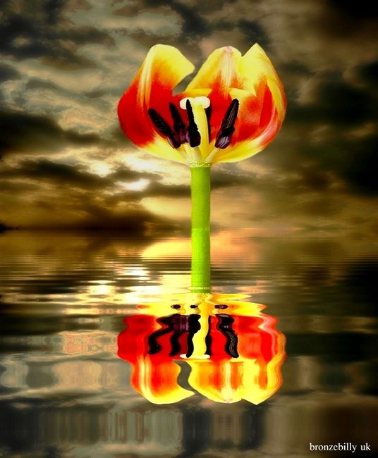 tulip sea sky clouds reflection bronzebilly
