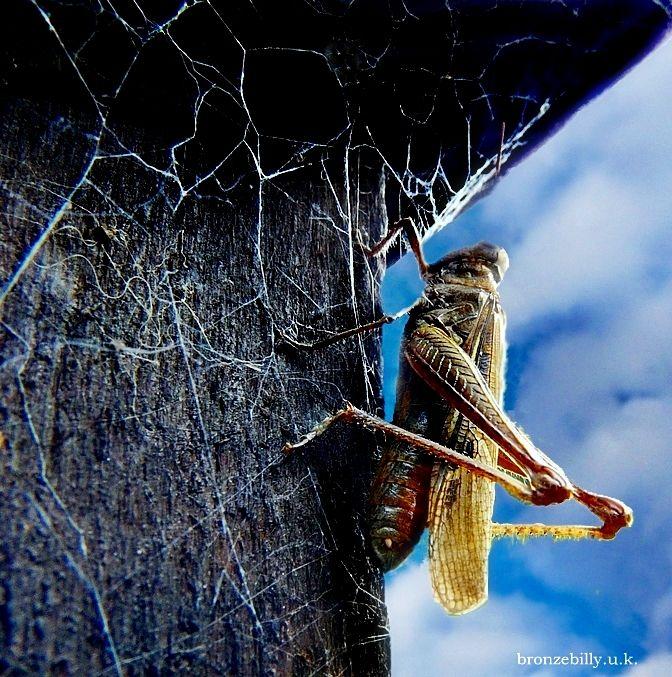 grasshopper spider web fence sky close-up bronzebi