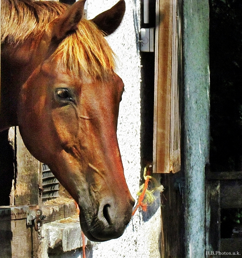 horse brown stable colour light