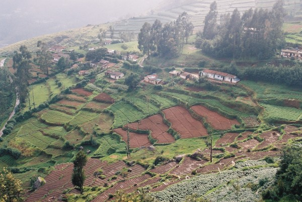 Different Phases of Tea Estates from OOTY