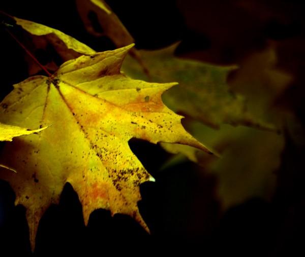 NOV-Leaf