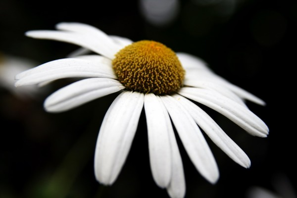 Just a simple flower