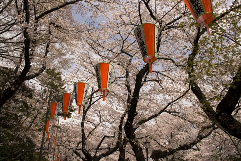 Follow the lanterns part 1
