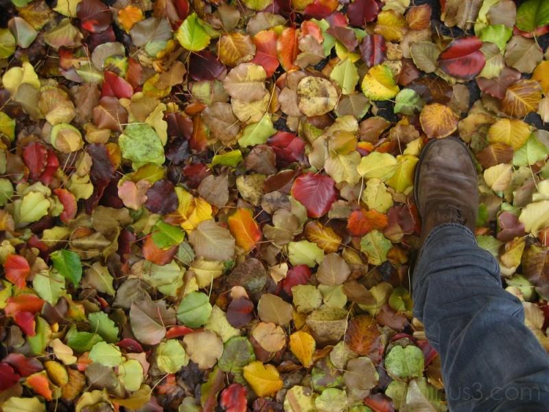 ...fall...