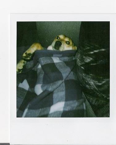 Doggie Burrito