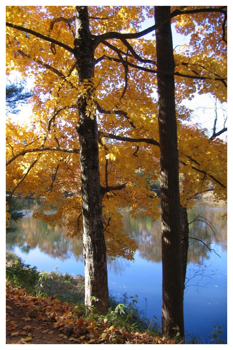 Biltmore Garden Lake