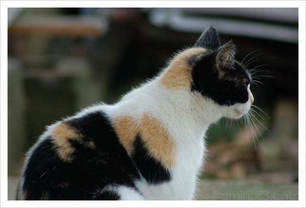 Strayed Cat