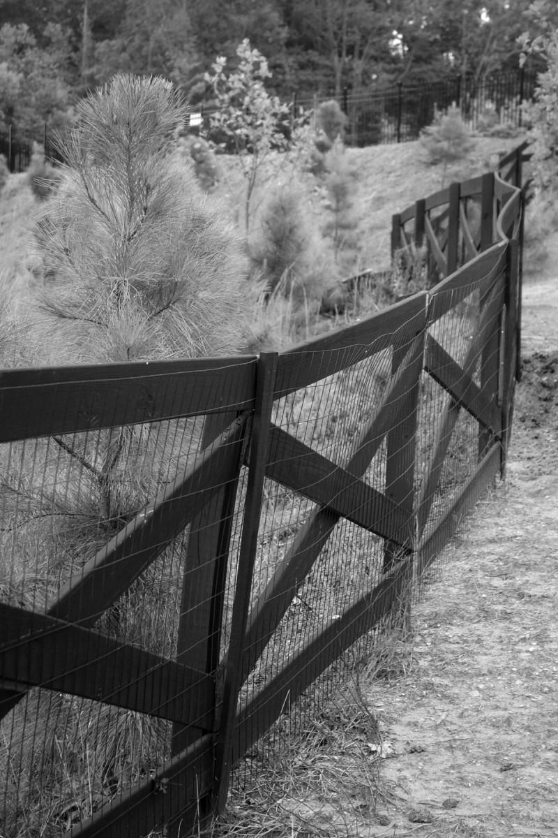 Black Fence II