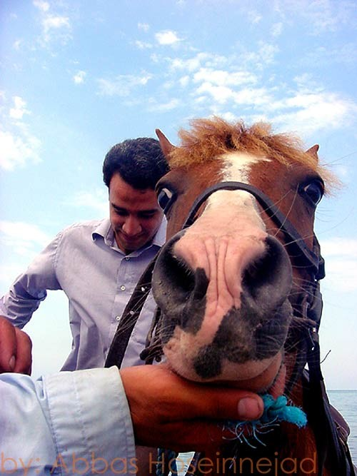 مرد و اسب Horse & man