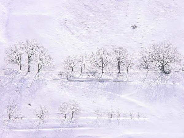 Snowy Shadows