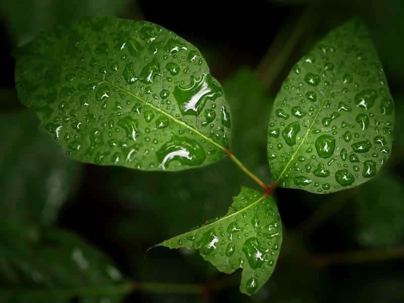 Still Dodging Rain Drops