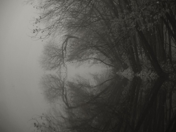 Through The Fog And Trees Revisited