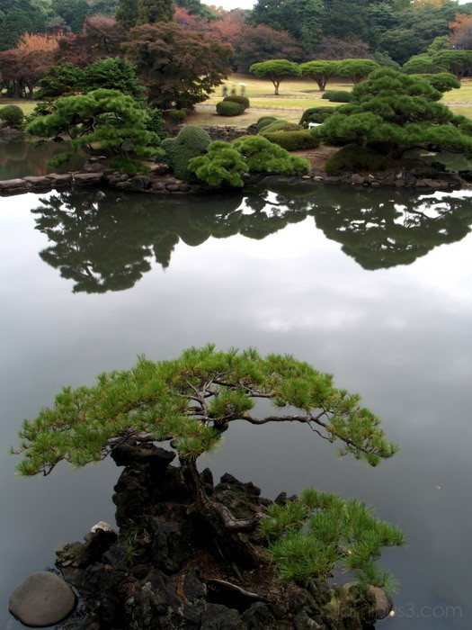 Bonsai and Park