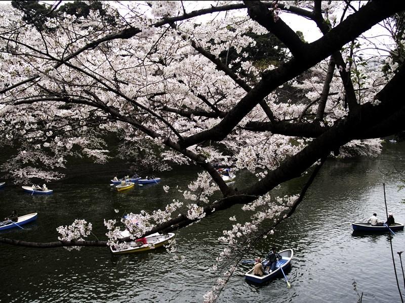 Chidorigafuchi Tokyo Darren Halliday Photography