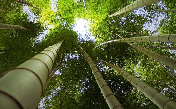 Bamboo Tokyo Darren Halliday Photography
