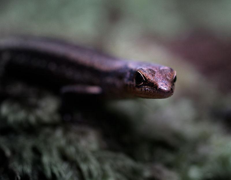 Cairns Mossman Australia Wildlife Photography Darr