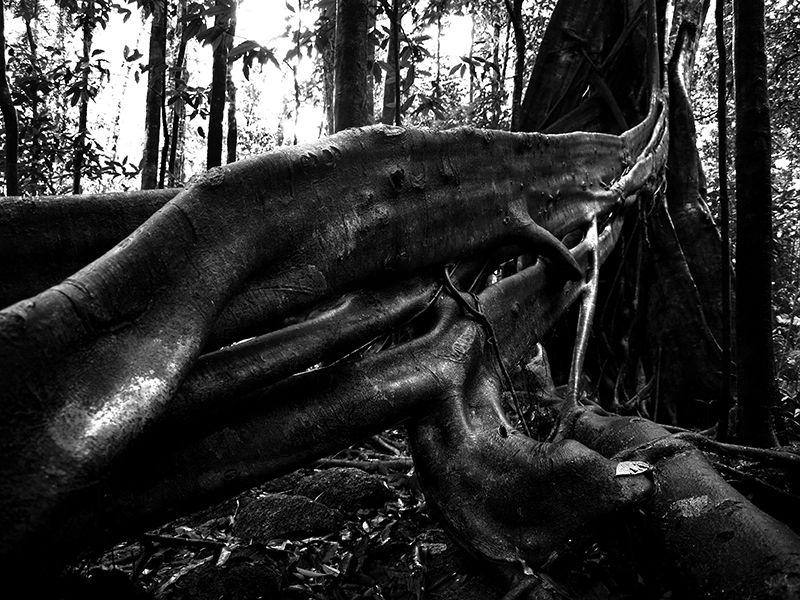 Cairns Mossman Australia Wildlife Photography