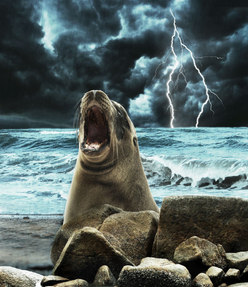 Mr Stormy Seal