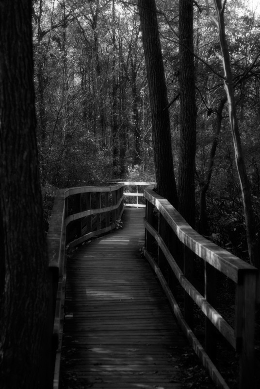 Great Swamp Walkway