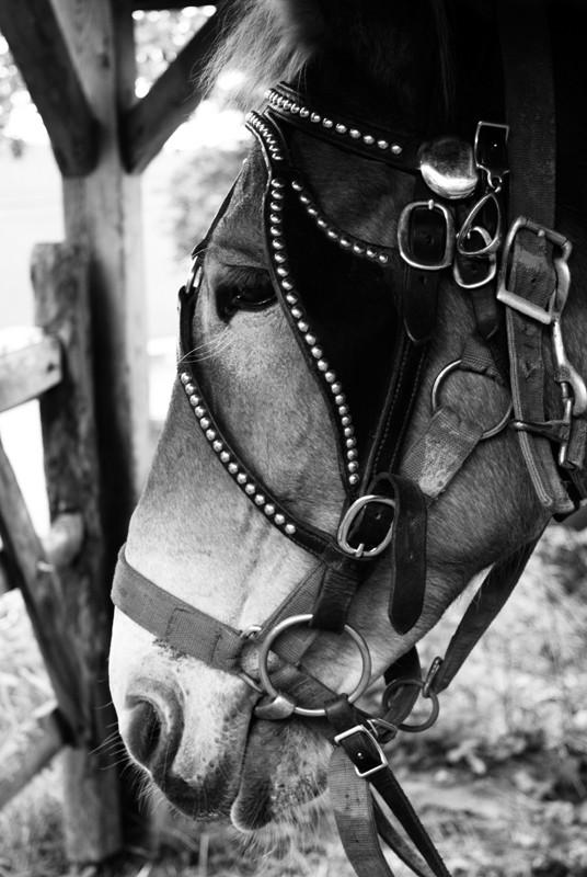 barge mule
