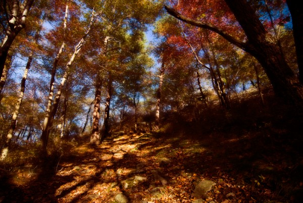 mountain path in high point nj in autumn