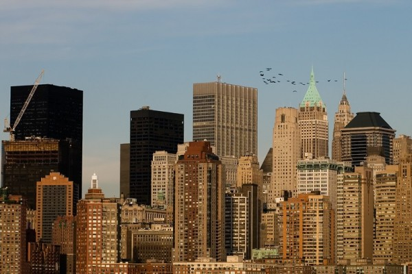 Flock Over Lower Manhattan