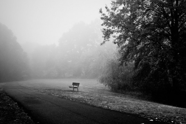 black and white Mohawk Park bench foggy fall morn