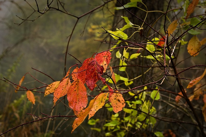 Fall Finale