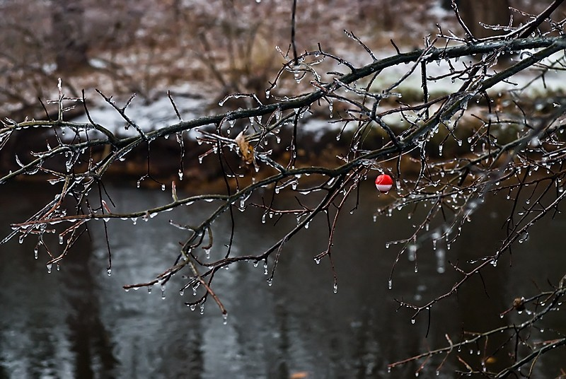 Bobber caught in the icy branches