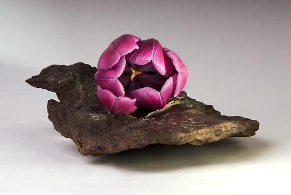 tulip on a rock