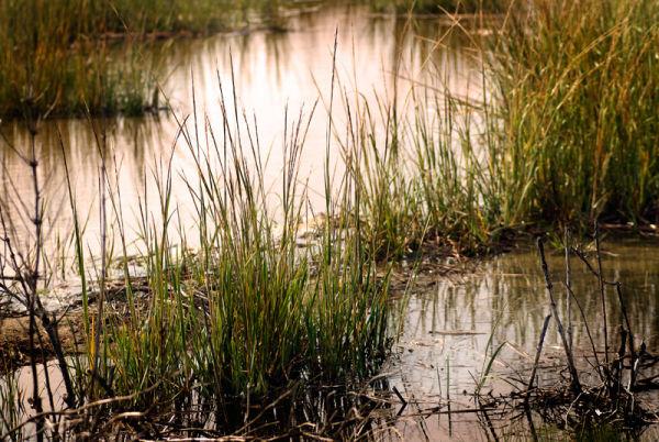 Sandy Hook salt Marsh